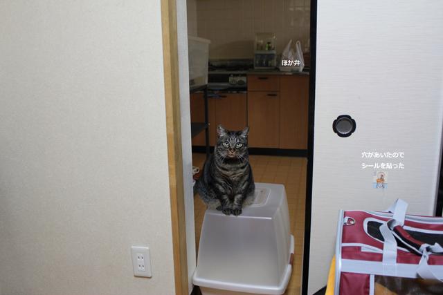 ちゃあ on the トイレ