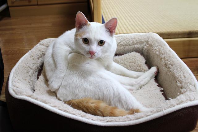 保護猫 こんニャお顔♪