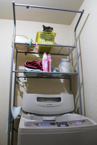 洗濯機の上