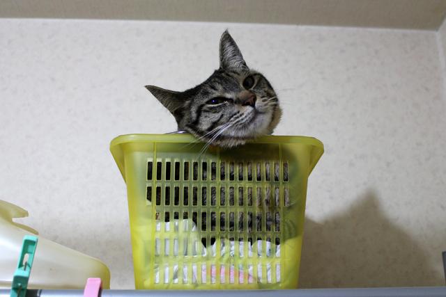 洗濯ネット入れの中!