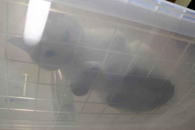 水槽の中から見ると怖いぞ