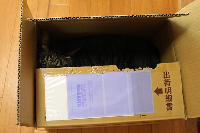 箱猫ちゃあさん♪