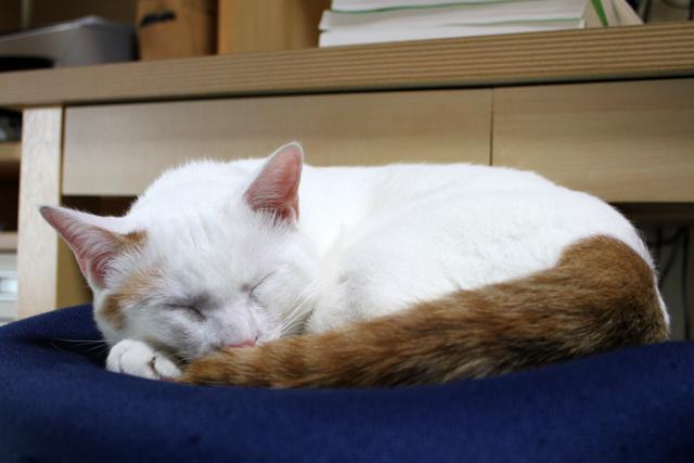 これが猫の普通の寝相