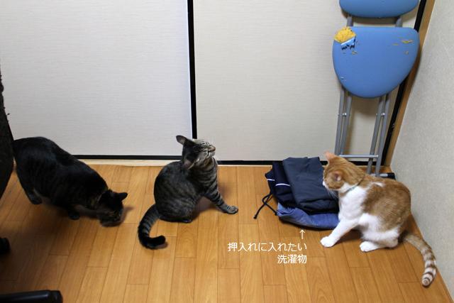 押入れ前で狙う猫ら