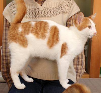 猫の里親募集2