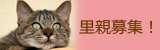 猫の里親募集バナー