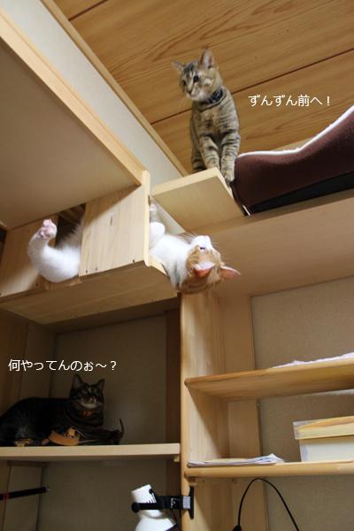 てんちゃん前進→